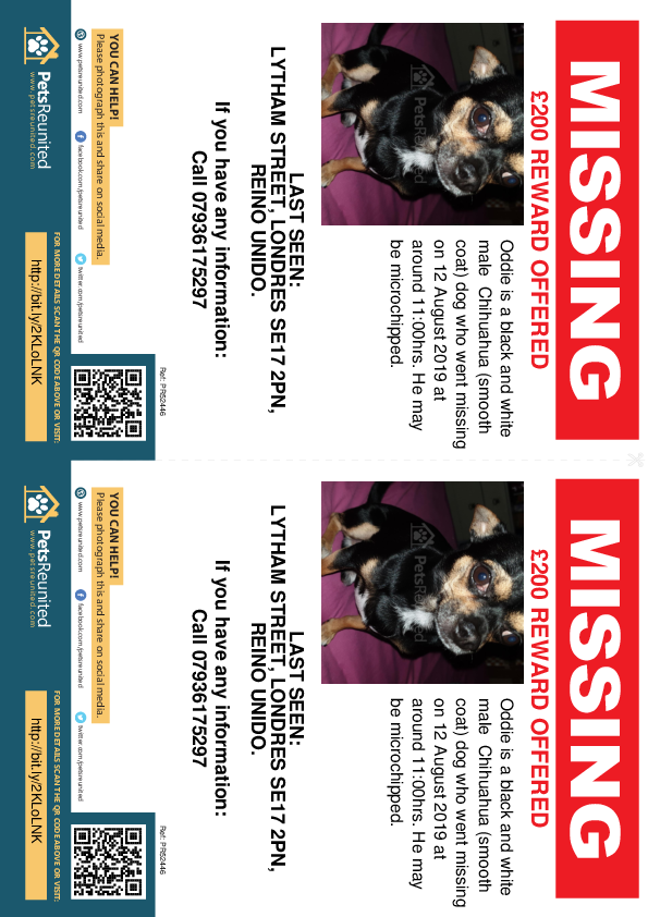 Lost pet flyers - Lost dog: Black and white Chihuahua (smooth coat) dog called Oddie