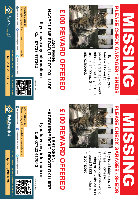 Lost pet flyers - Lost cat: Tabby cat called Tilly