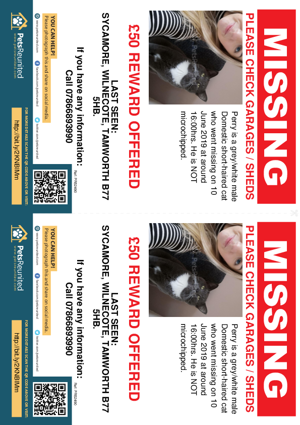 Lost pet flyers - Lost cat: Grey/White cat called Perry
