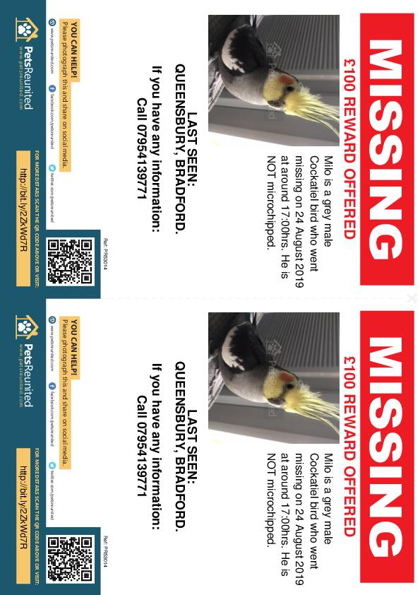 Lost pet flyers - Lost bird: Grey Cockatiel bird called Milo