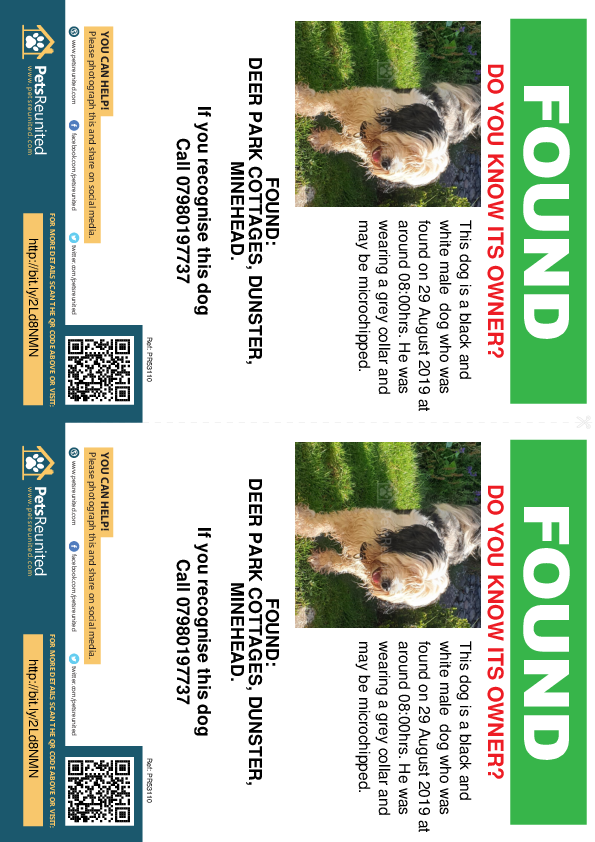 Found pet flyers - Found dog: Black and white dog