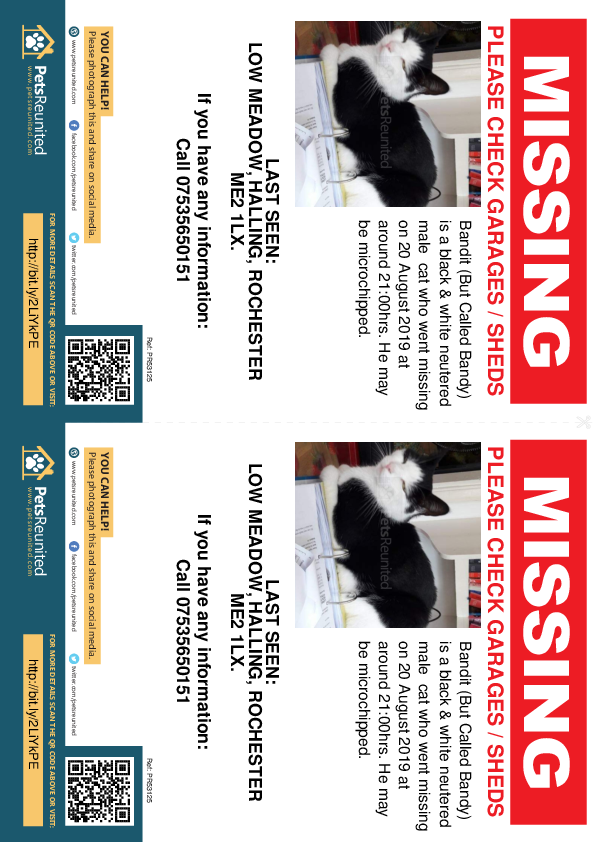 Lost pet flyers - Lost cat: Black & White cat called Bandit (But Called Bandy)