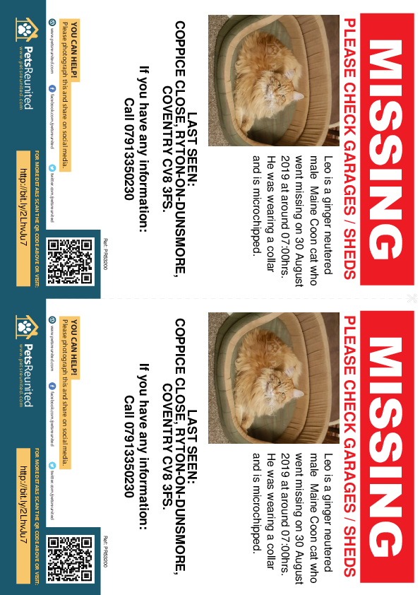 Lost pet flyers - Lost cat: ginger Maine Coon cat called Leo