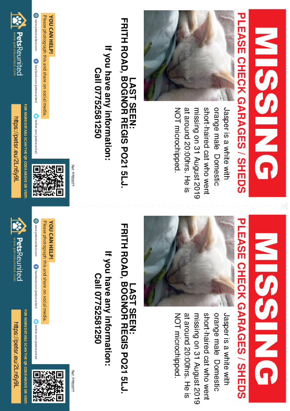 Lost pet flyers - Lost cat: White with Orange cat called Jasper