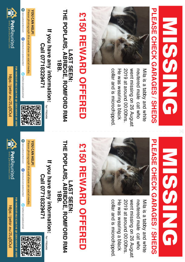 Lost pet flyers - Lost cat: Tabby and white cat called Mila