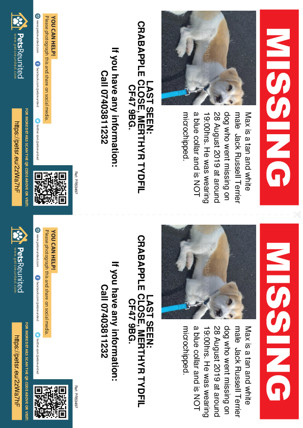 Lost pet flyers - Lost dog: Tan and White Jack Russell Terrier dog called Max
