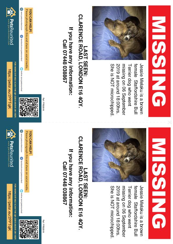 Lost pet flyers - Lost dog: Brown Staffordshire Bull Terrier dog called Jessie Melaku