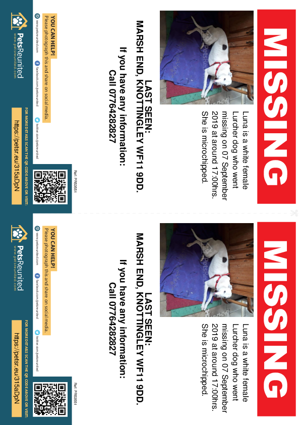 Lost pet flyers - Lost dog: White Lurcher dog called Luna