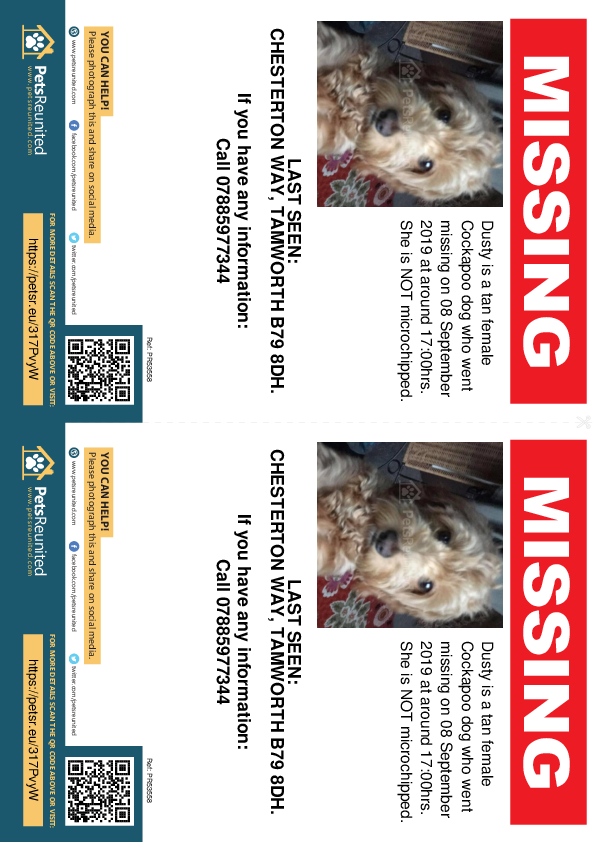 Lost pet flyers - Lost dog: Tan Cockapoo dog called Dusty