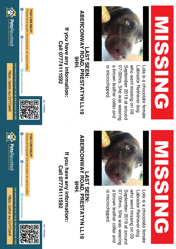 Lost pet flyers - Lost dog: Chocolate Labrador Retriever dog called Lola