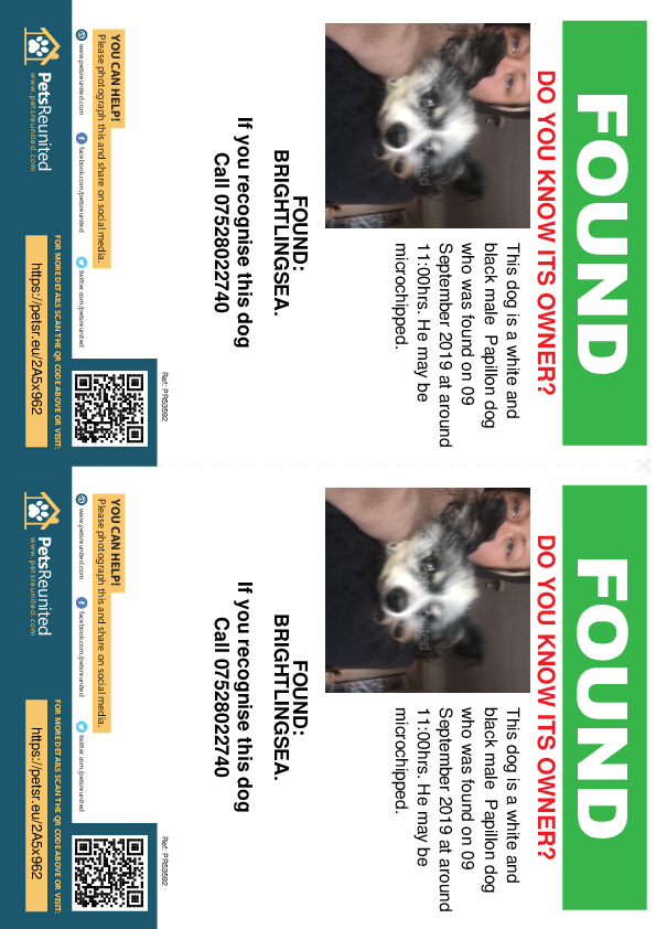 Found pet flyers - Found dog: White and black Papillon dog