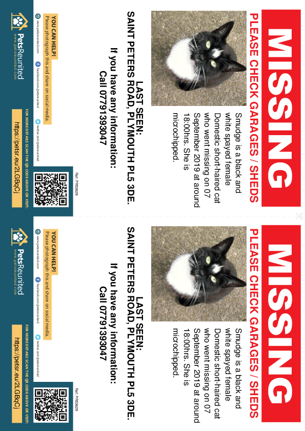 Lost pet flyers - Lost cat: Black and white cat called Smudge