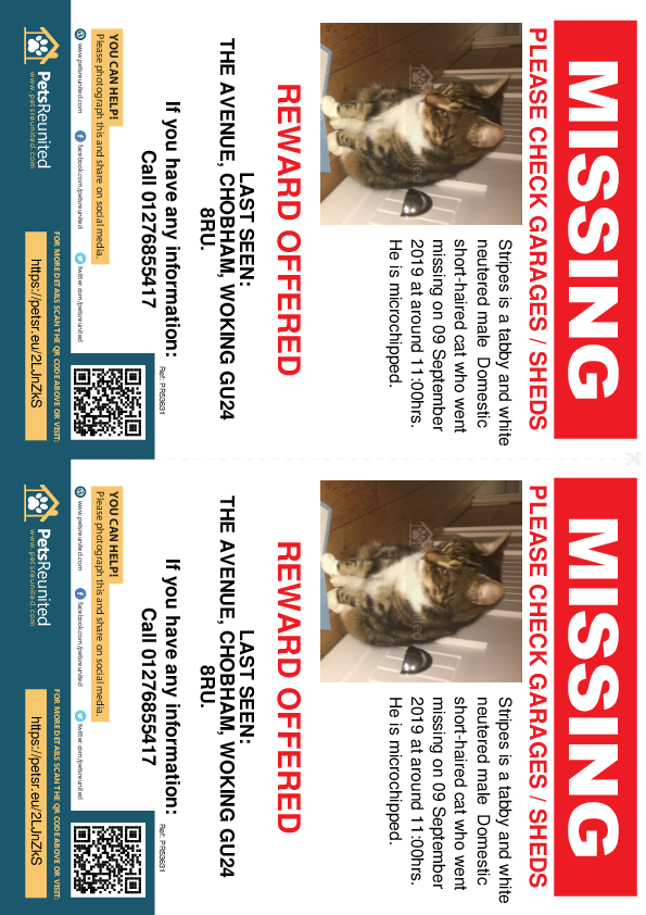 Lost pet flyers - Lost cat: Tabby and white cat called Stripes