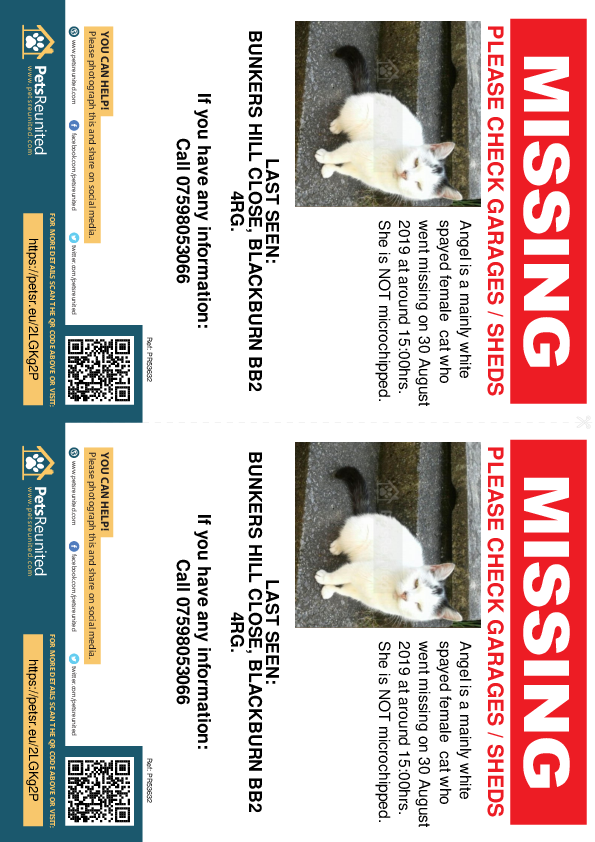 Lost pet flyers - Lost cat: Mainly White cat called Angel