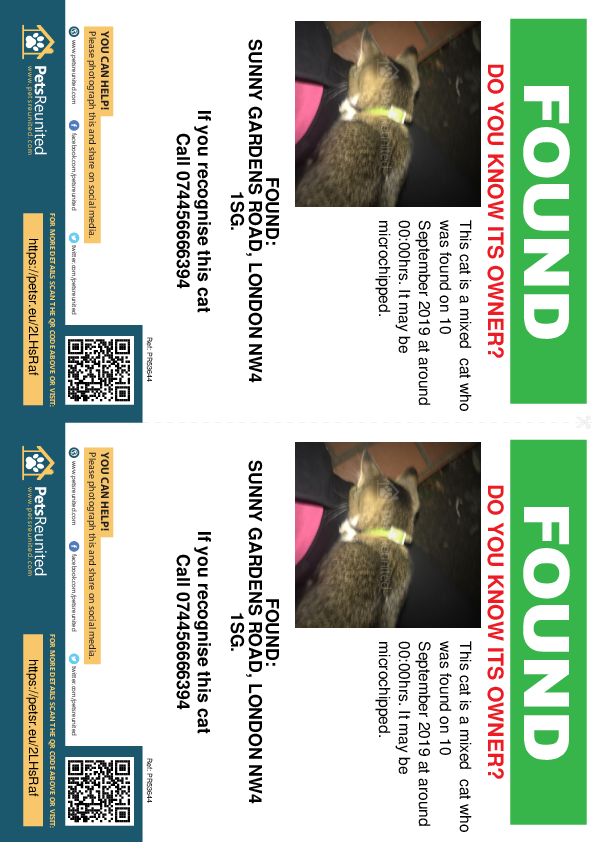 Found pet flyers - Found cat: Mixed cat
