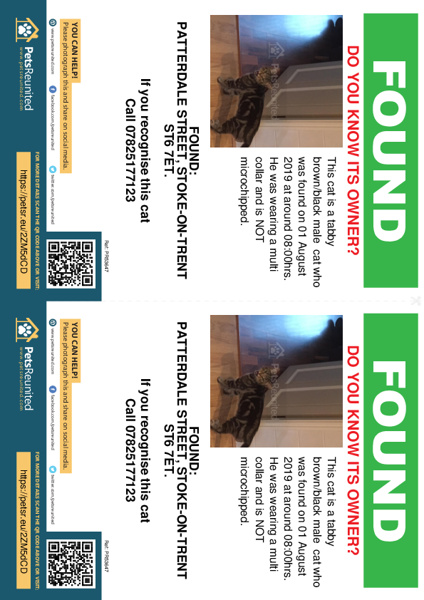 Found pet flyers - Found cat: Tabby brown/black cat