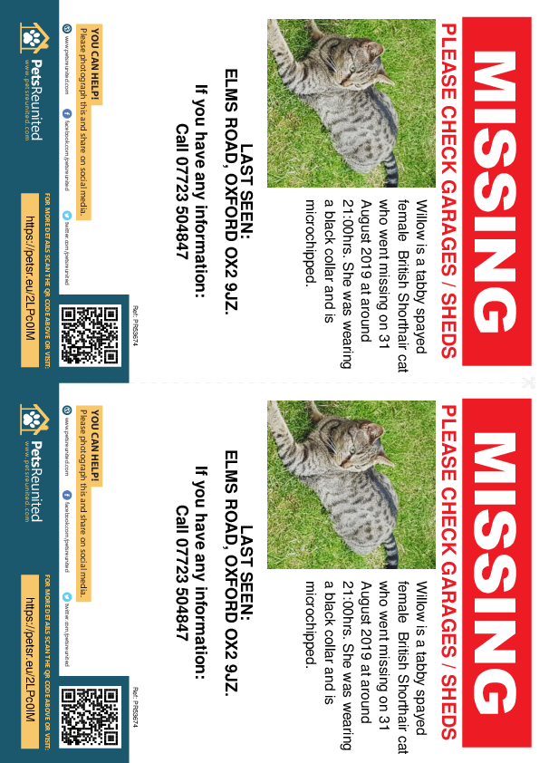 Lost pet flyers - Lost cat: Tabby British Shorthair cat called Willow