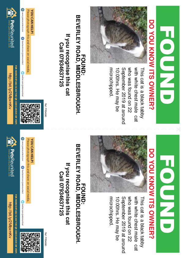 Found pet flyers - Found deceased Black tabby with white chest cat