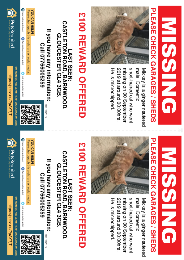 Lost pet flyers - Lost cat: Ginger cat called Mickey