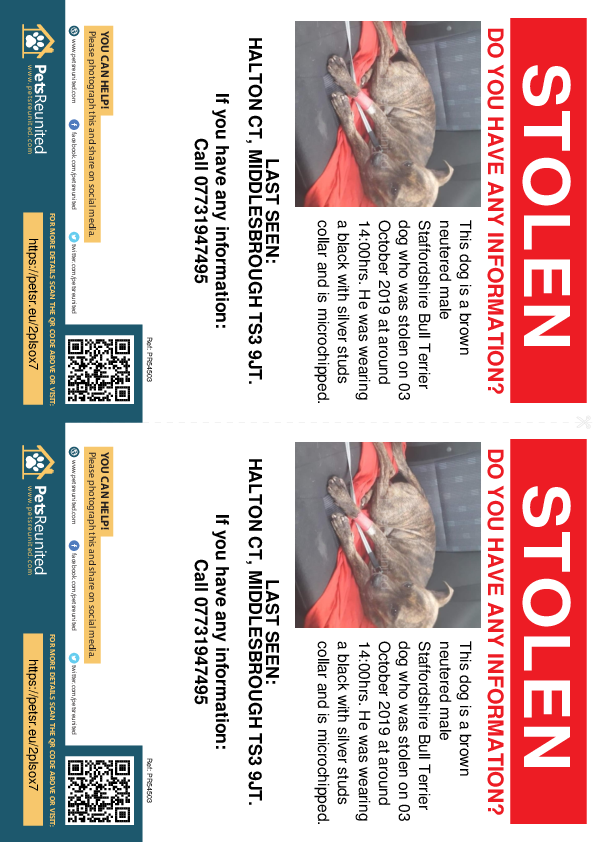 Stolen pet flyers - Stolen dog: Brown Staffordshire Bull Terrier dog [name witheld]