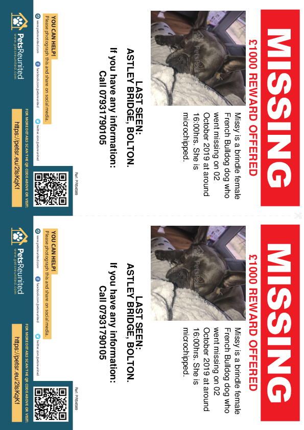Lost pet flyers - Lost dog: Brindle French Bulldog dog called Missy