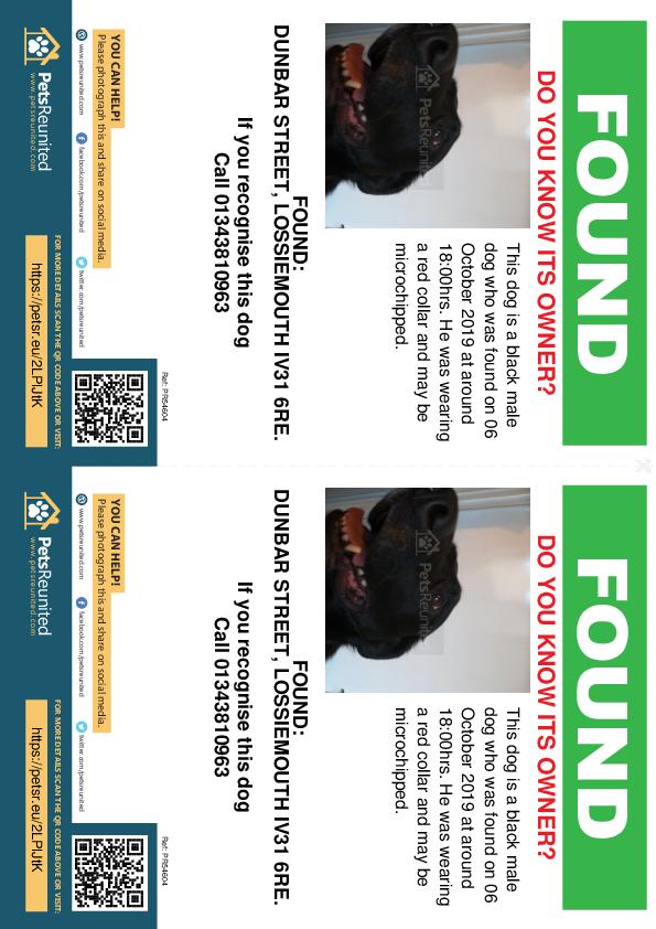 Found pet flyers - Found dog: Black dog