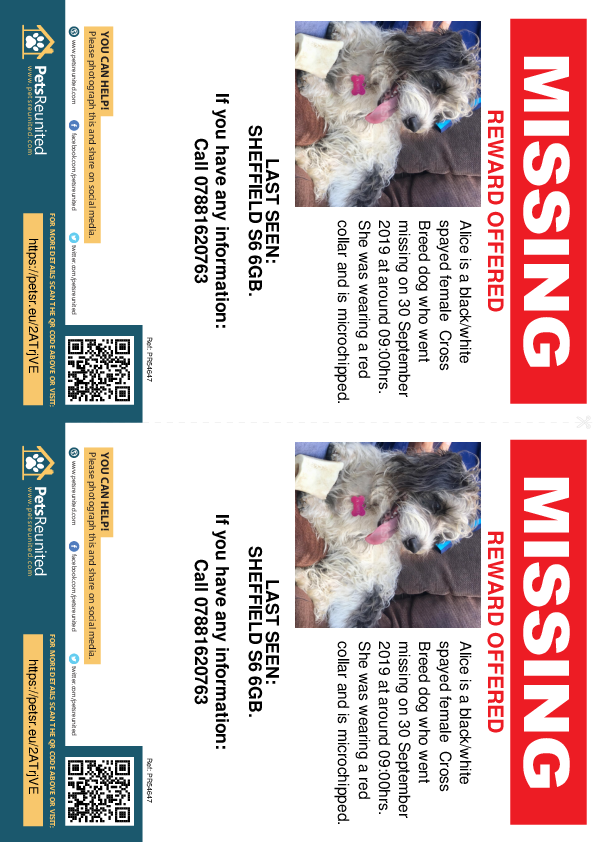Lost pet flyers - Lost dog: Black/White dog called Alice
