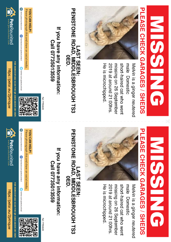 Lost pet flyers - Lost cat: Ginger cat called Melvin