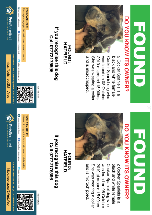 Found pet flyers - Found dog: Black and white Cocker Spaniel dog
