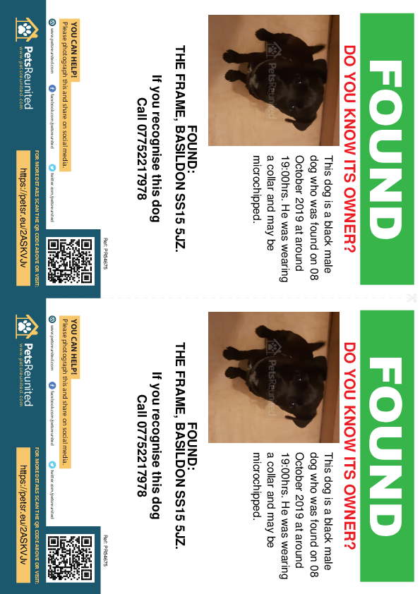 Found pet flyers - Found dog: Black dog