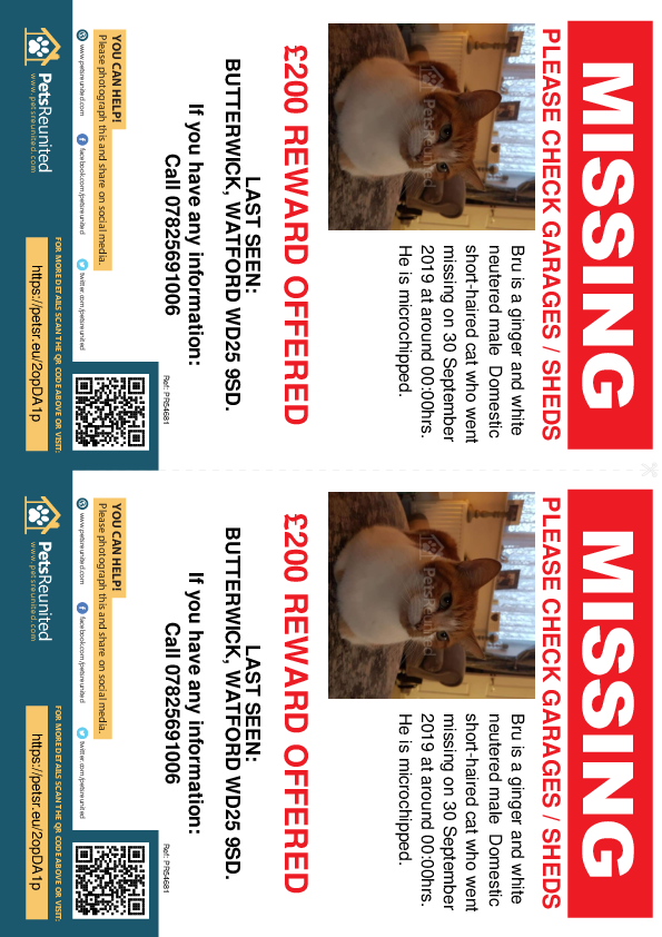 Lost pet flyers - Lost cat: Ginger and white cat called Bru