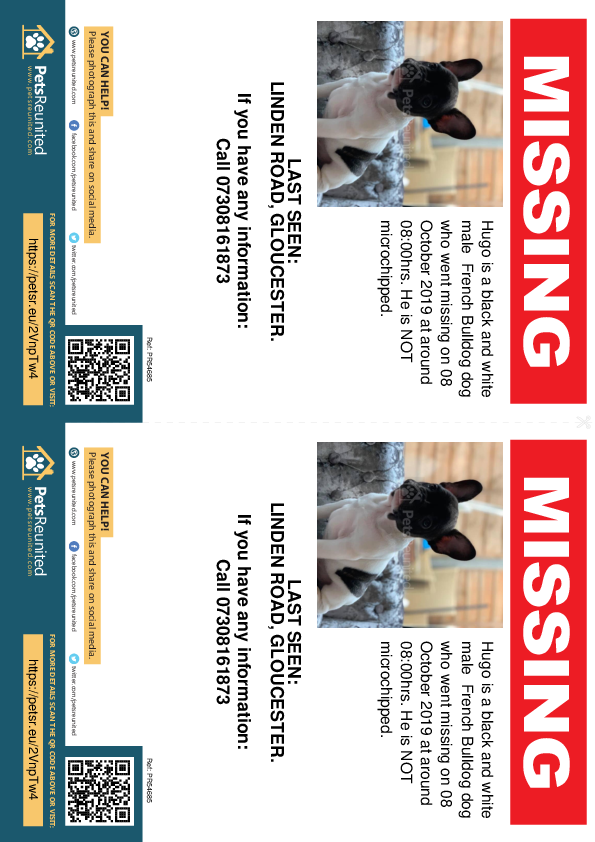 Lost pet flyers - Lost dog: Black and white French Bulldog dog called Hugo