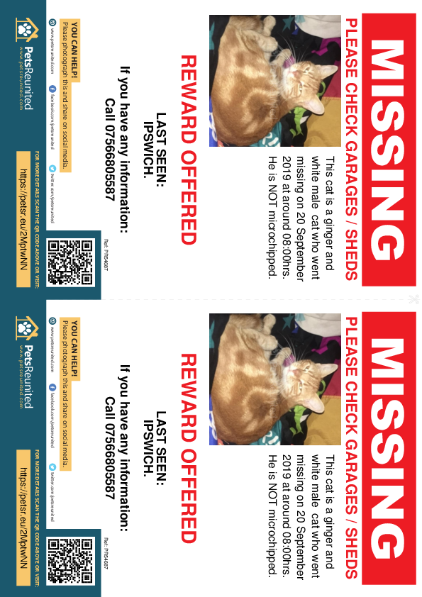 Lost pet flyers - Lost cat: Ginger and white cat [name witheld]