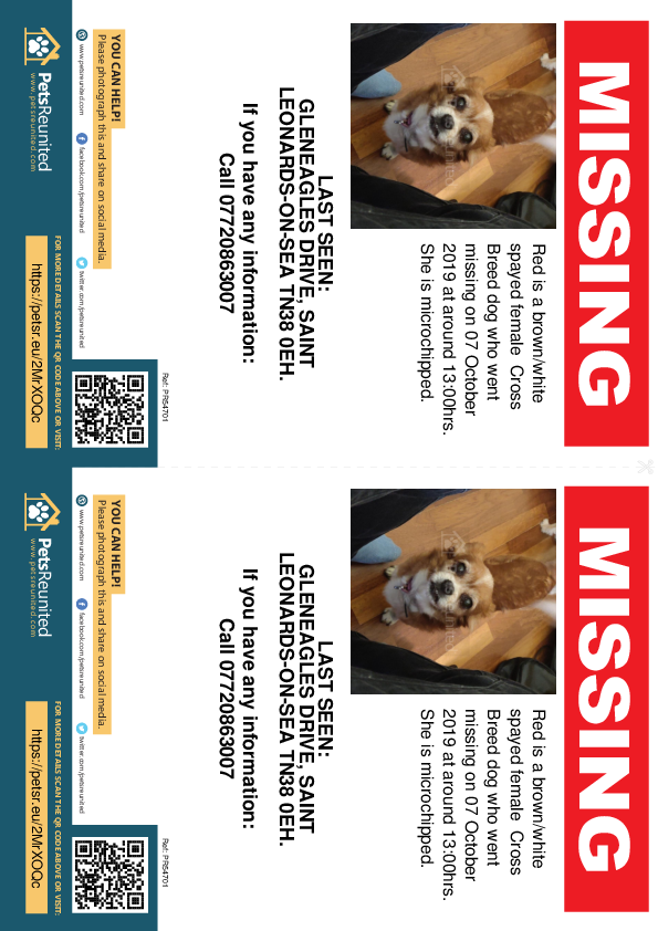 Lost pet flyers - Lost dog: Brown/White dog called Red