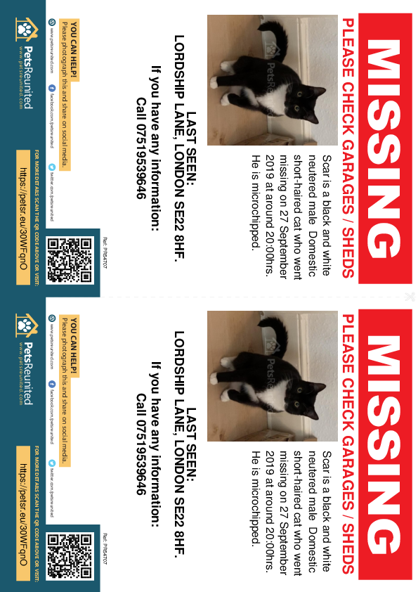 Lost pet flyers - Lost cat: Black and white cat called Scar