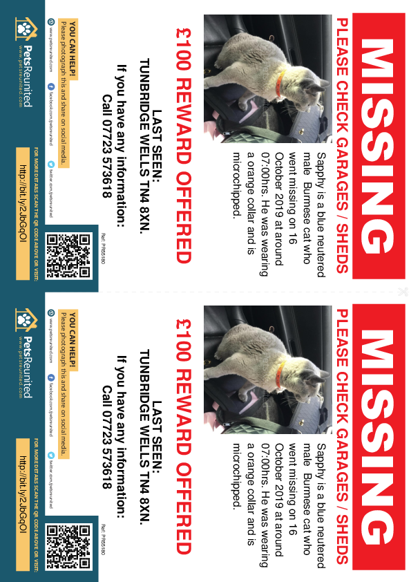Lost pet flyers - Lost cat: Blue Burmese cat called Sapphy
