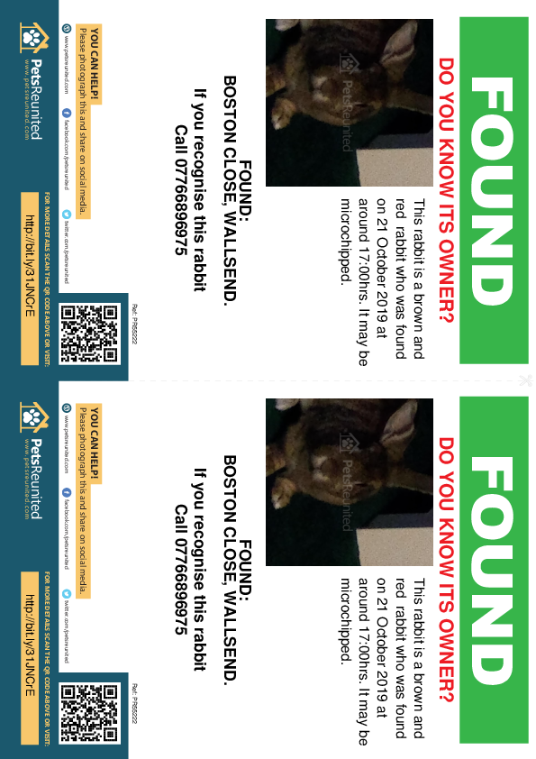 Found pet flyers - Found rabbit: Brown and red rabbit