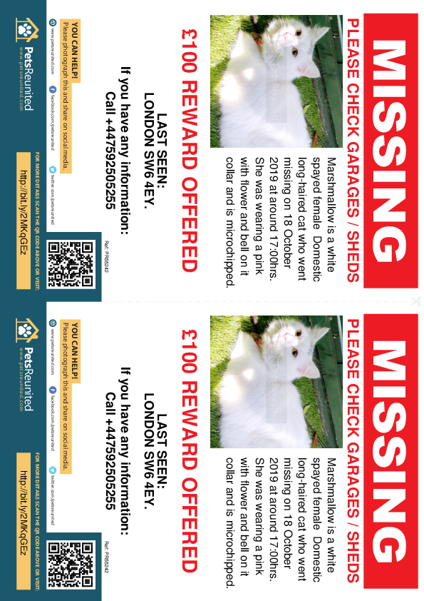 Lost pet flyers - Lost cat: White cat called Marshmallow