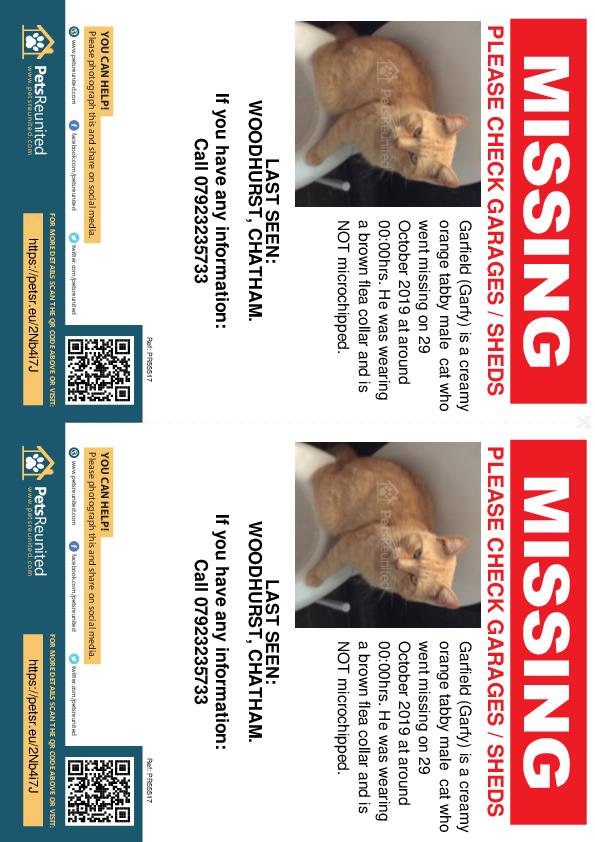 Lost pet flyers - Lost cat: Creamy orange tabby cat called Garfield (Garfy)
