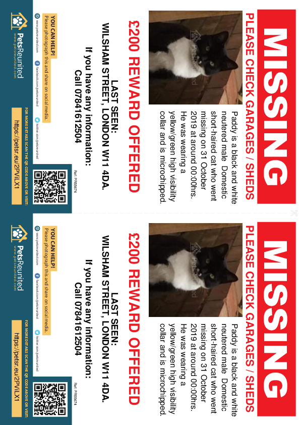 Lost pet flyers - Lost cat: Black and white cat called Paddy