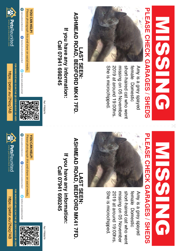 Lost pet flyers - Lost cat: Grey cat called Amy