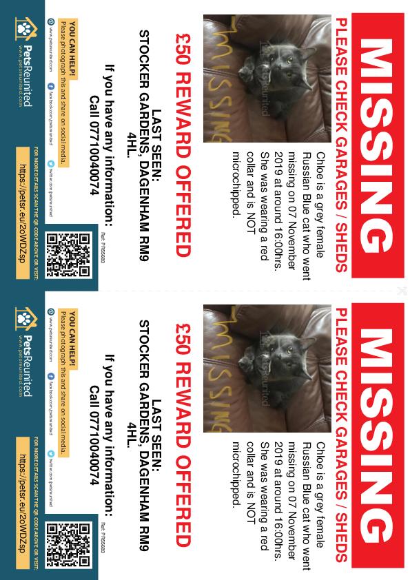 Lost pet flyers - Lost cat: Grey Russian Blue cat called Chloe