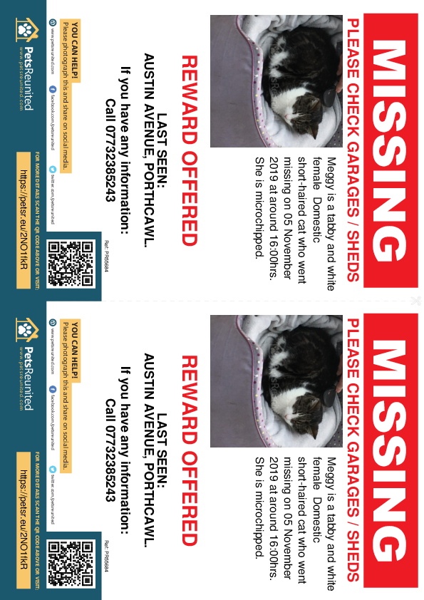 Lost pet flyers - Lost cat: Tabby and white cat called Meggy