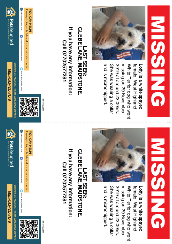 Lost pet flyers - Lost dog: White West Highland White Terrier dog called Lotty