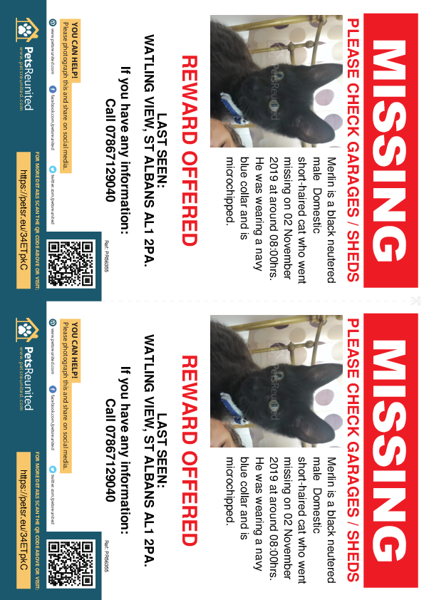 Lost pet flyers - Lost cat: Black cat called Merlin