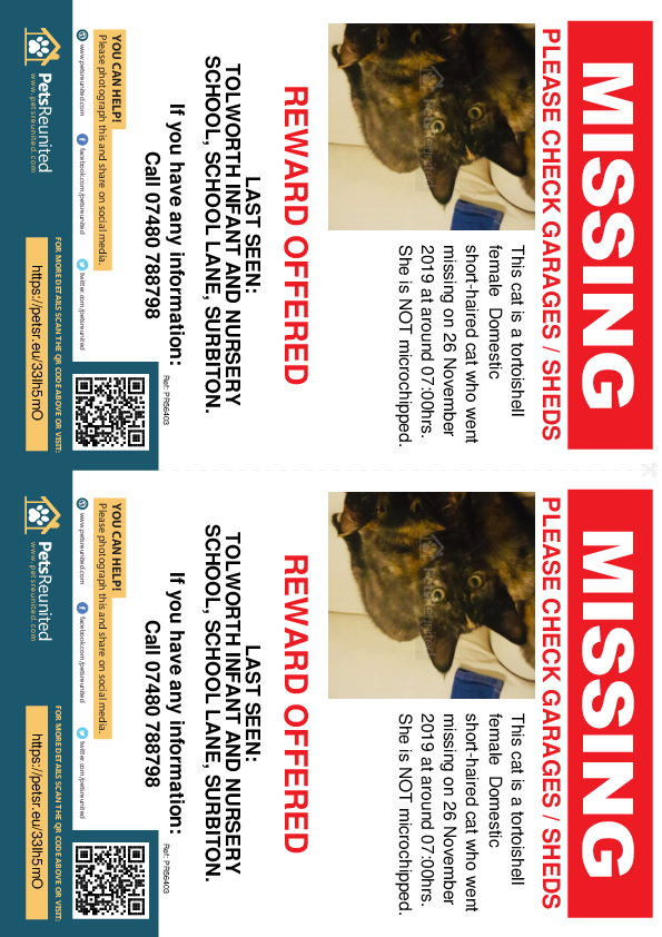 Lost pet flyers - Lost cat: Tortoishell cat [name witheld]