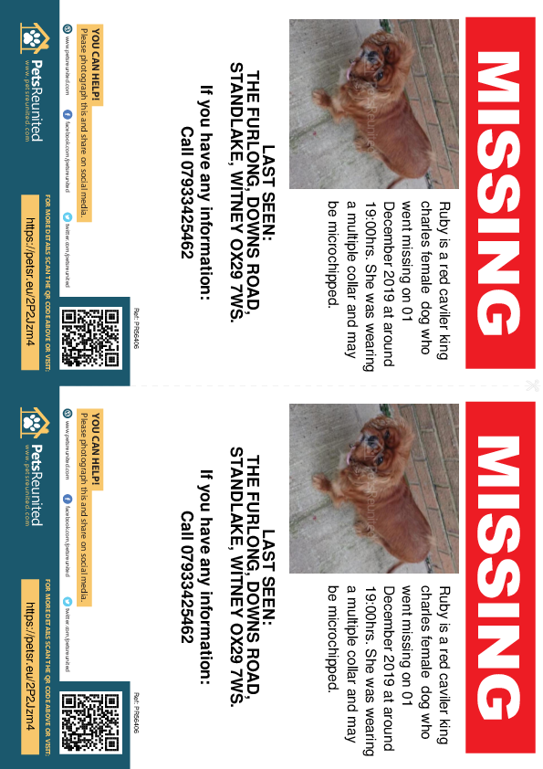 Lost pet flyers - Lost dog: Red caviler king Charles dog called Ruby