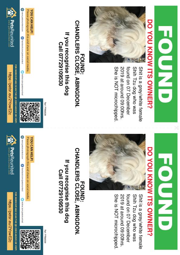 Found pet flyers - Found dog: Grey/White Shih Tzu dog