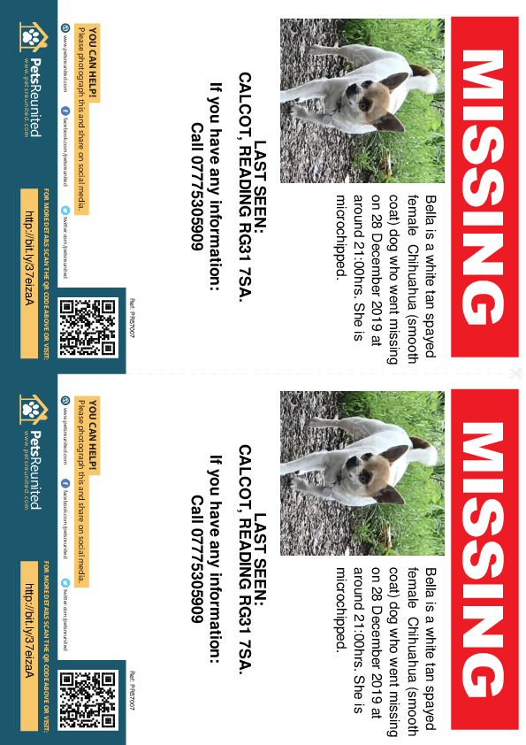 Lost pet flyers - Lost dog: White tan Chihuahua (smooth coat) dog called Bella