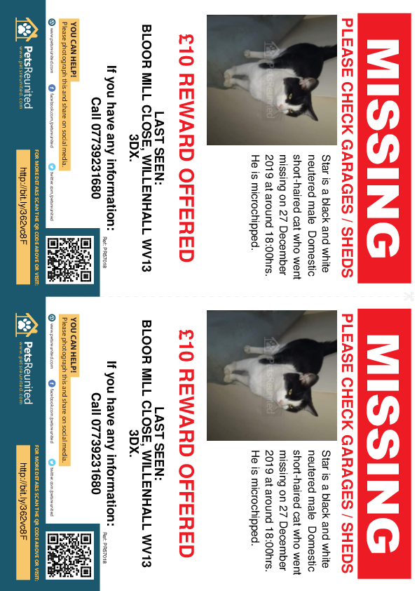 Lost pet flyers - Lost cat: Black and white cat called Star